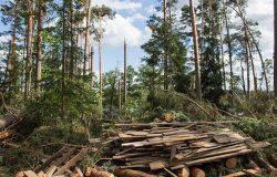 Uprzątanie terenów dotkniętych nawałnicami potrwa do 2019 r.