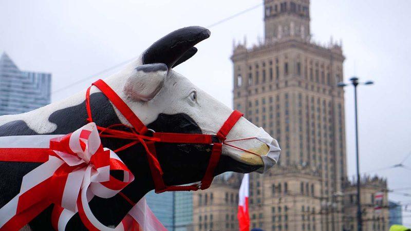 Manifestacja rolników w Warszawie