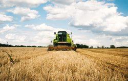 Kombajn rolniczy na polu