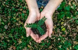Kobieta z rośliną w dłoniach